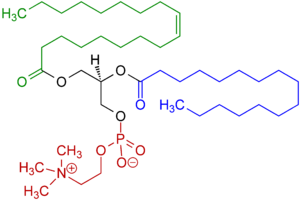 Lecithin - An example of a phosphatidylcholine, a type of phospholipid in lecithin. Red - choline and phosphate group; Black - glycerol; Green - monounsaturated fatty acid; Blue - saturated fatty acid