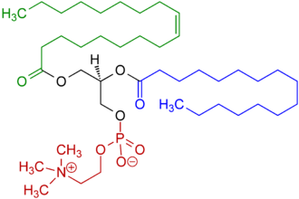 Phosphatidylcholine - Image: 1 Oleoyl 2 almitoyl phosphatidylcholine Structural Formulae V.1