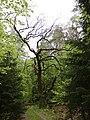12 Eiche an der Weiche Kreis Rothenburg Wümme Niedersachsen.jpg