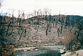 2003 Bushfires aftermath, Big River near Anglers Rest.jpg
