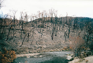 Bushfires in Australia - Intense bushfires can seriously impact the environment, such as here by the Big River, near Anglers Rest, East Gippsland, after the 2003 Victorian fires