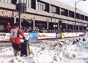 Iditarod Trail Sled Dog Race - Aliy Zirkle's team on Anchorage's Fourth Avenue at the start of the 2003 Iditarod