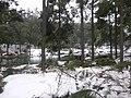 2008年的那场大雪 - panoramio.jpg