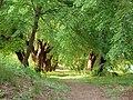 20090501720DR Lossa (Thallwitz) Schloßpark Kopflindenallee.jpg