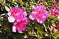 2011-03-05 03-13 Madeira 178 Monte, Jardim tropical Monte Palace.jpg