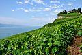 2012-08-12 10-19-59 Switzerland Canton de Vaud Rivaz.JPG
