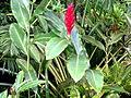 2012 kveten botanicka zahrada 094.jpg