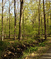 2013-05-06 17 29 22 Stream and forest along Turkey Top Road in northern Lebanon Township in Hunterdon County, New Jersey.jpg