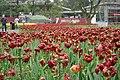 2014-04-04 石象湖 郁金香 liuzusai - panoramio (25).jpg