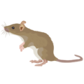 201412 rat.png