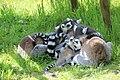 2015-05-24 Vogelpark Marlow 30.jpg