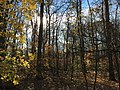 2015-11-15 09 40 25 Late autumn foliage in the woodlands along the West Branch Shabakunk Creek in Ewing, New Jersey.jpg