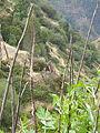 2015 Madeira Pana (125).JPG