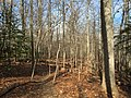 2016-02-08 14 05 00 View north along the Gerry Connolly Cross County Trail between Vale Road and Lawyers Road in Oakton, Fairfax County, Virginia.jpg