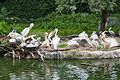 2016 Singapur, Jurong Bird Park (100).jpg
