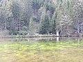 2017-09-09 (180) Grüner See at Tragöß, Austria.jpg