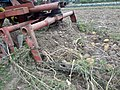 20180830-Cocagne-Landecy-patates-trembleuse2.jpg