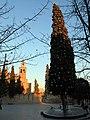 257 Xiprer de Nadal, pl. Octavià (Sant Cugat del Vallès).JPG