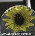 3d-Gelatine-Blume Sonnenblume 2.png