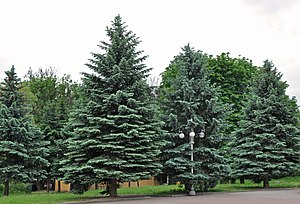 46-112-5006 Group of Trees RB.jpg