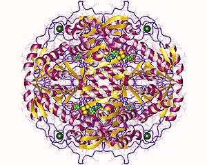 Retinal dehydrogenase - retinal dehydrogenase inhibited by Yb