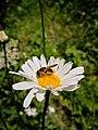 66 Turismo Emilia Romagna 8 giugno 2019 Parco dei laghi di Suviana e Brasimone, un ringraziamento speciale alle guide Eugenia e Walter.jpg