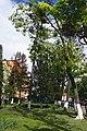73-101-5007 Група рідкісних дерев на Головній 135.jpg
