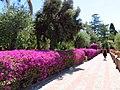 8 Taormina (100) (12879366423).jpg