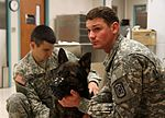 903d Military Working Dog Detachment's annual check up 141021-A-MS153-001.jpg