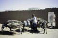 ASC Leiden - van Achterberg Collection - 6 - 031 - Un homme avec une chèche (turban) qui recouvre tout est debout avec trois ânes - Agadez, Niger - janvier 2005.tif