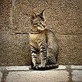 A cat spotted near OU arts college (1).jpg