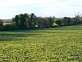 A field and some hedges near Coln St Aldwyns - geograph.org.uk - 1777489.jpg