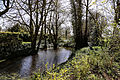 A garden pond at White Roding Essex England.jpg