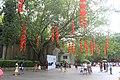 A huge banyan tree in the East Lake Park3.jpg