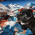 A quiet moment at Everest. -tibet -canon -dogs (15715664649).jpg