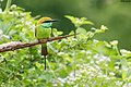 A small bird.jpg