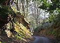 A sunken way Witley, England..jpg