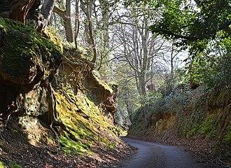 Sunken lane - A sunken way, Witley, Surrey