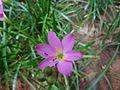A violet flower.jpg