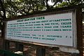Acharya Jagadish Chandra Bose Indian Botanic Garden - Howrah 2011-01-08 9720.JPG