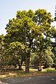 Acharya Jagadish Chandra Bose Indian Botanic Garden - Howrah 2011-01-08 9797.JPG