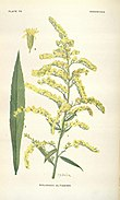 Addisonia (PLATE 075) (8577495976).jpg