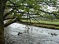 Afon Lliw, near Llanuwchllyn - geograph.org.uk - 168032.jpg