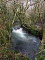 Afon Taf at Llanfyrnach - geograph.org.uk - 657313.jpg