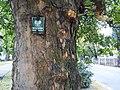 Al.Niepodleglosci, Poznan, trees.jpg