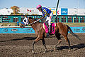 Alberta Breeders' Fall Classic 2014 - Horse Racing (15118158077).jpg