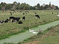 Alfriston meadows - geograph.org.uk - 1527082.jpg