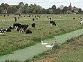 Alfriston meadows - geograph.org.uk - 1527082.jpg