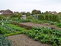 Allotments, Dorchester - geograph.org.uk - 963645.jpg