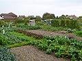Allotments, Dorchester - geograph.org.uk - 963645.jpg